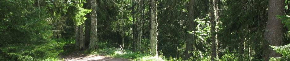 Дорога на Секирную гору